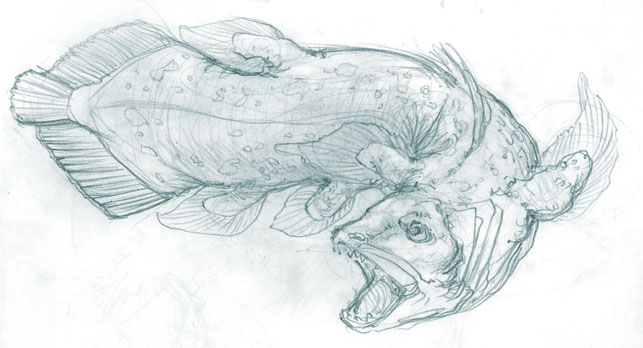 coelacanth_practice_1_by_serfiaso-d6zxzju